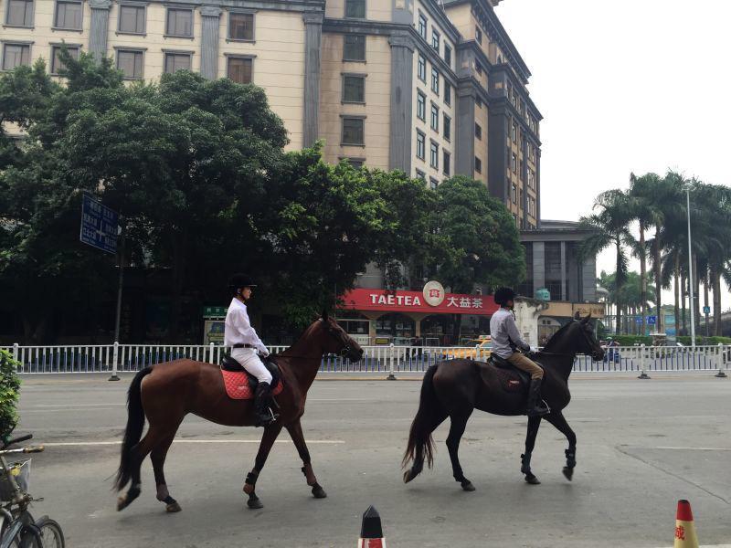 南宁江南区街头惊现马帮引发路人热议