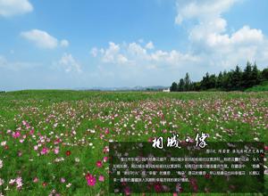 淮北东湖公园格桑花盛放 醉人美景吸引大批游客