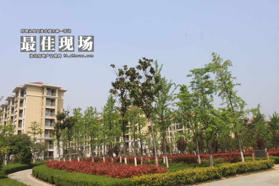 桓湖花园 公园里的家 4月30日开盘