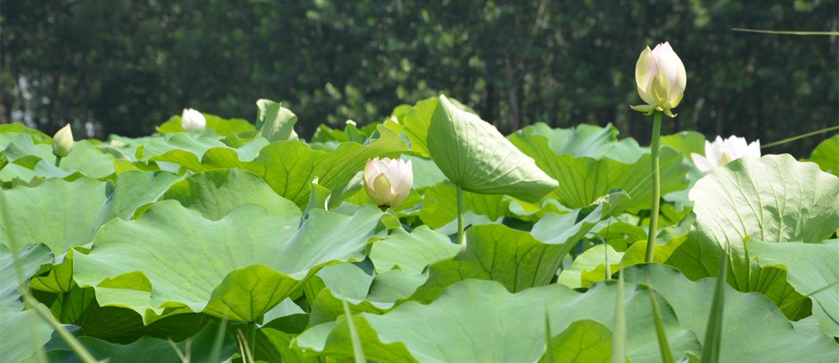安徽三汊河国家湿地公园实拍
