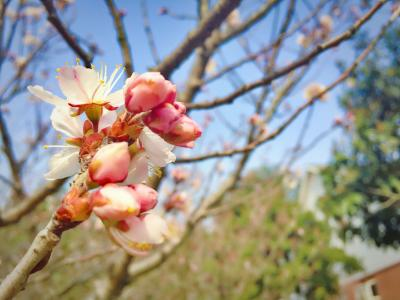 阳春三月赏花正当时 蚌埠这些楼盘就在公园旁