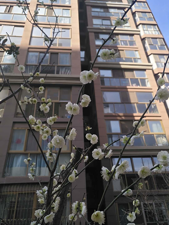 山水文园|三月满园春色关不住  赏花正当时!