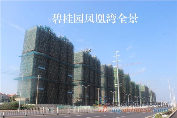 碧桂园凤凰湾全景