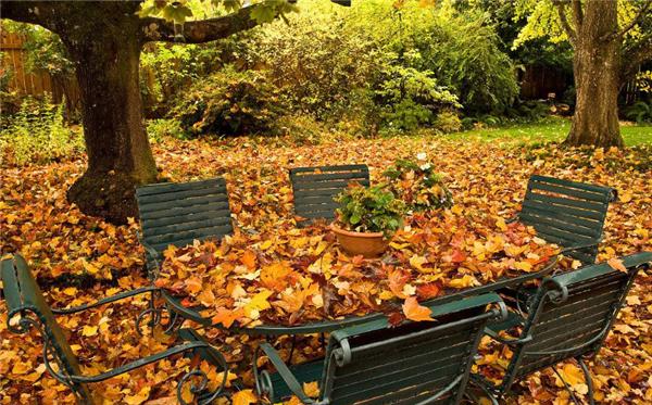 【弘阳•时光里】秋天,想要一个院子,花开花落一辈子