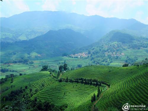 宣城六个村被认定省级一村一品专业示范村