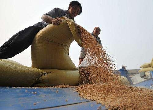 安徽夏粮收购全面铺开 三等小麦最低价每百斤112元