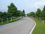 """桐城:""""四好农村路""""路面硬化工程11月底前全部完工"""
