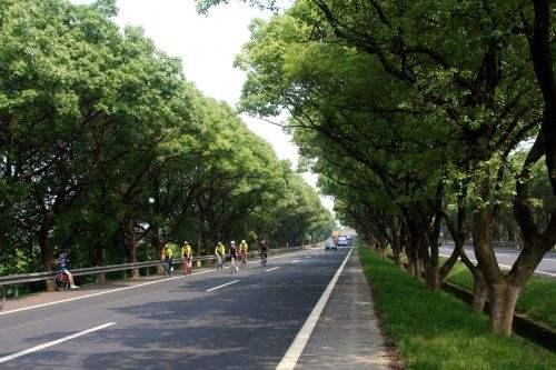 提前五个月通车 合肥香樟大道改造工程全面竣工
