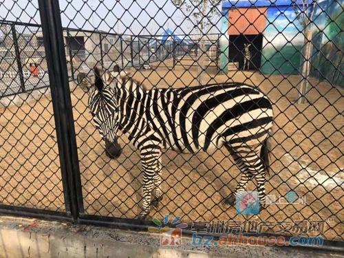 亳州动物园今天开业,前100名免票!