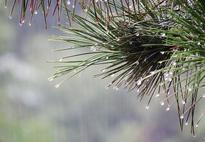 断崖式降温 未来一周安徽平均气温将骤降10-12℃